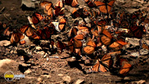 Still #2 from National Geographic: Great Migrations