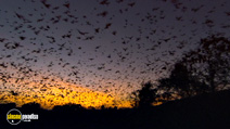 Still #7 from National Geographic: Great Migrations