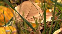 Still #1 from Four Seasons: Adorable Autumn