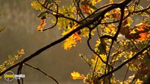 Still #2 from Four Seasons: Adorable Autumn