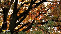 Still #3 from Four Seasons: Adorable Autumn