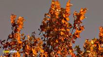 Still #4 from Four Seasons: Adorable Autumn