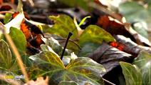 Still #5 from Four Seasons: Adorable Autumn
