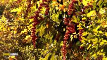 Still #6 from Four Seasons: Adorable Autumn