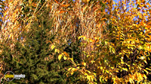 Still #7 from Four Seasons: Adorable Autumn