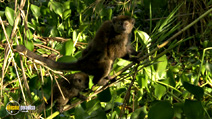 Still #2 from Madagascar