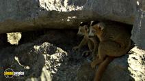 Still #4 from Madagascar