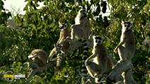 Still #8 from Madagascar