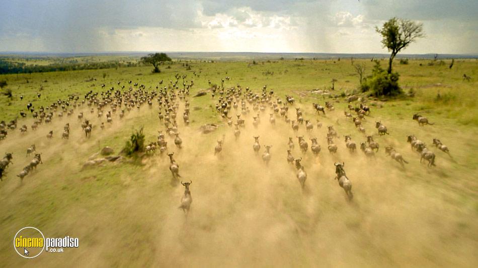 Africa: The Serengeti online DVD rental