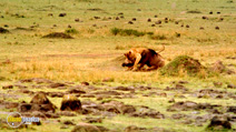 Still #1 from Africa: The Serengeti