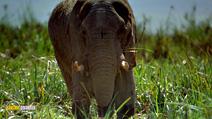 Still #4 from Africa: The Serengeti