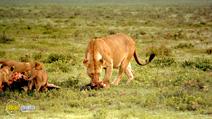 Still #6 from Africa: The Serengeti