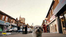 Still #5 from Pudsey the Dog: The Movie