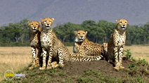 Still #1 from African Cats