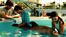Still #8 from Dolphin Tale