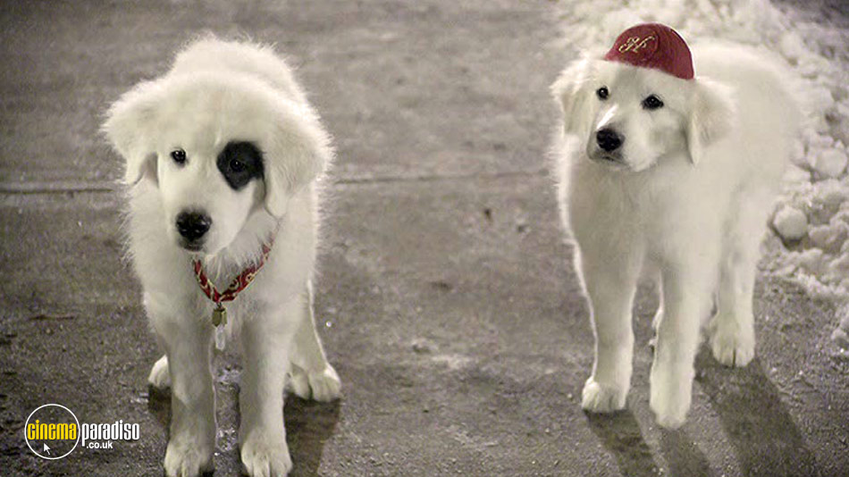 Santa Paws 2: The Santa Pups online DVD rental