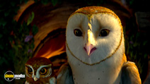 Still #4 from Legend of the Guardians: The Owls of Ga'Hoole