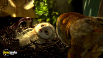 Still #7 from Legend of the Guardians: The Owls of Ga'Hoole