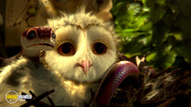 Still #8 from Legend of the Guardians: The Owls of Ga'Hoole