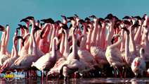 Still #3 from The Crimson Wing: Mystery of the Flamingos