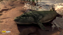 Still #2 from David Attenborough's: Rise of Animals: Triumph of the Vertebrates