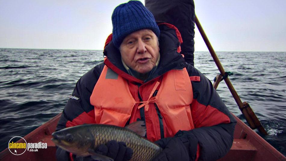 David Attenborough's: Rise of Animals: Triumph of the Vertebrates online DVD rental