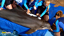 A still #54 from Dolphin Tale 2