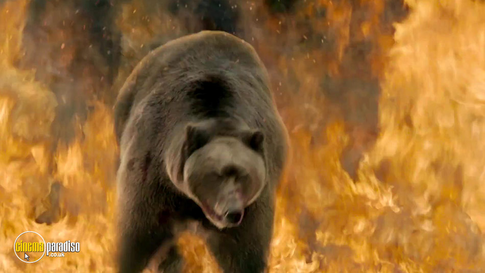 Into the Grizzly Maze online DVD rental