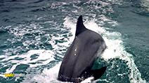 Still #6 from Dolphins