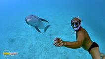 Still #8 from Dolphins