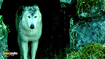 Still #2 from Brotherhood of the Wolf