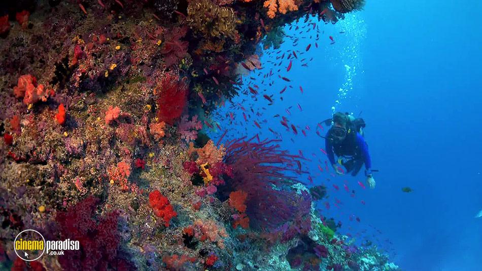 Coral Reef Adventure online DVD rental