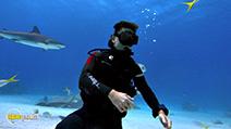 Still #1 from Sharkwater