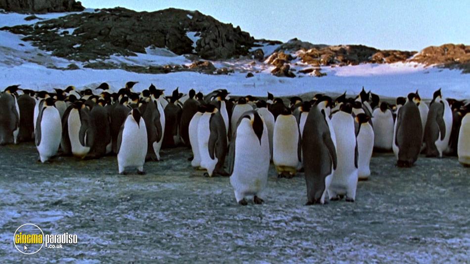 March of the Penguins (aka La Marche de l'empereur) online DVD rental