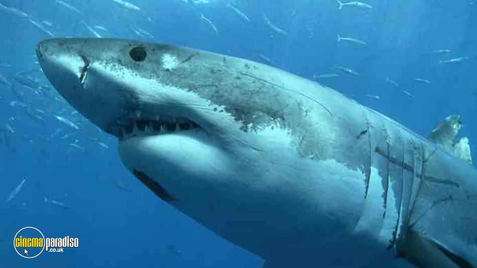 Shark online DVD rental