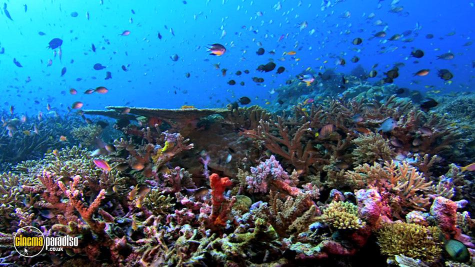 Planet Ocean online DVD rental
