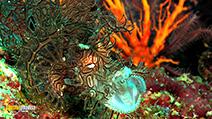A still #7 from Planet Ocean (2012)