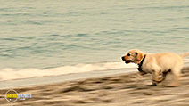 A still #6 from Marley and Me 2: The Puppy Years (2011)