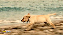 A still #5 from Marley and Me 2: The Puppy Years (2011)