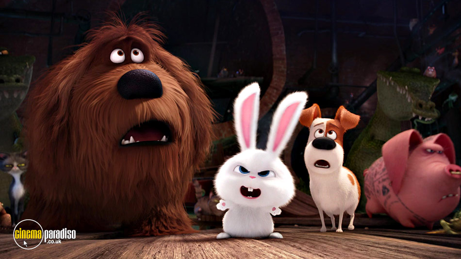 The Secret Life of Pets (aka Untitled Pets Movie) online DVD rental