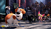 A still #5 from The Secret Life of Pets (2016)
