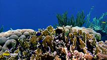 A still #29 from Ocean Aquarium (2008)