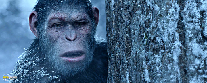 A still #1 from War for the Planet of the Apes (2017)