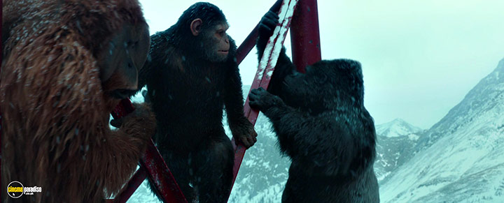 A still #2 from War for the Planet of the Apes (2017)