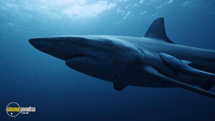 A still #3 from Shark (2015)