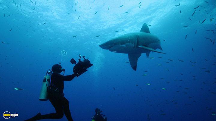 A still #6 from Shark (2015)