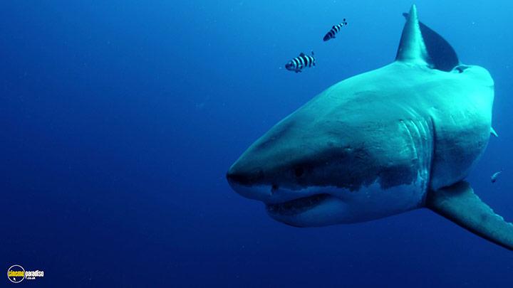 A still #2 from Shark (2015)